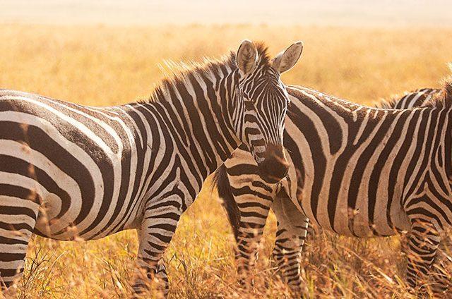 https://www.safariventures.com/wp-content/uploads/1116-640x424.jpg