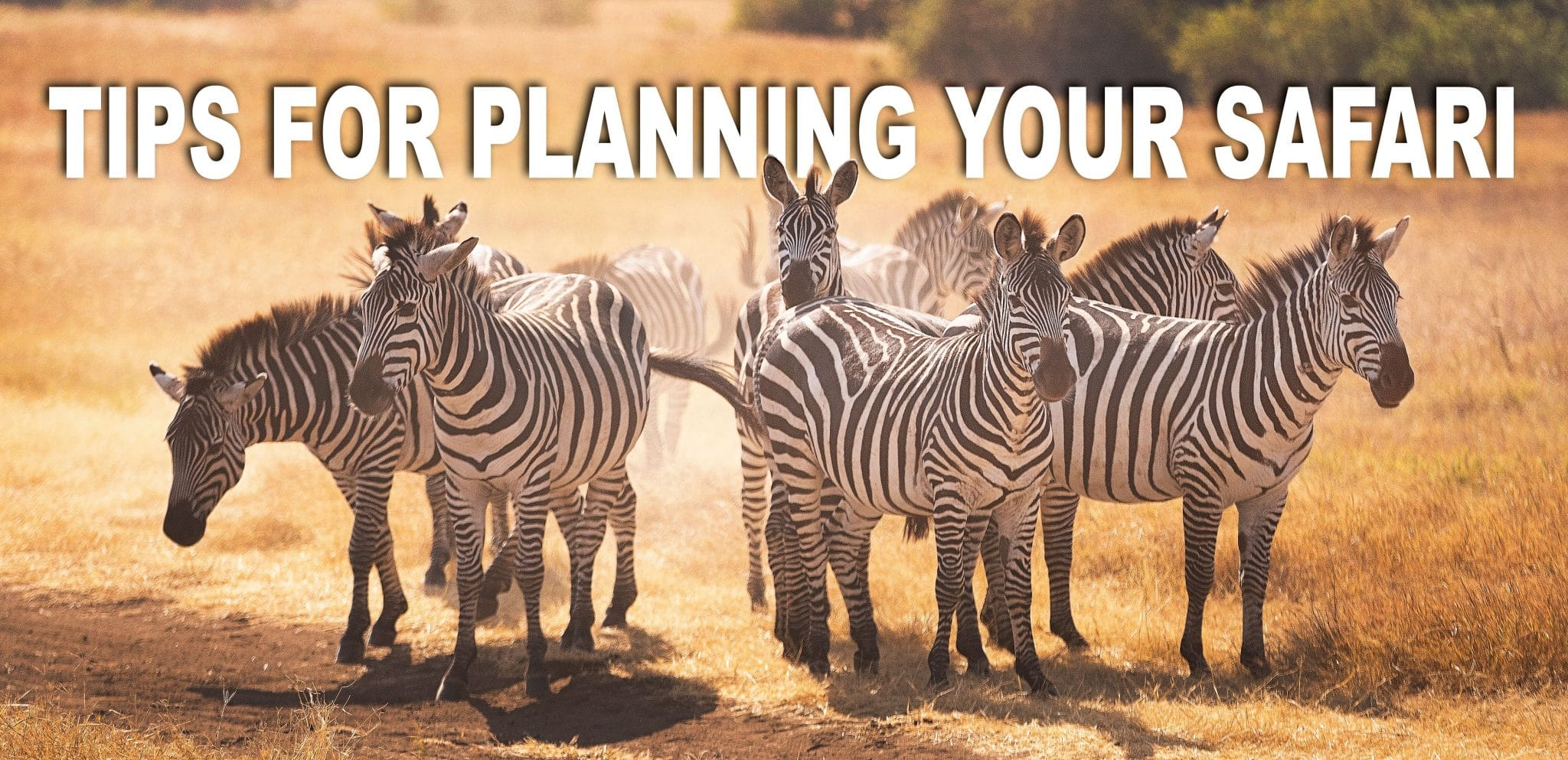 Tips for planning your safari