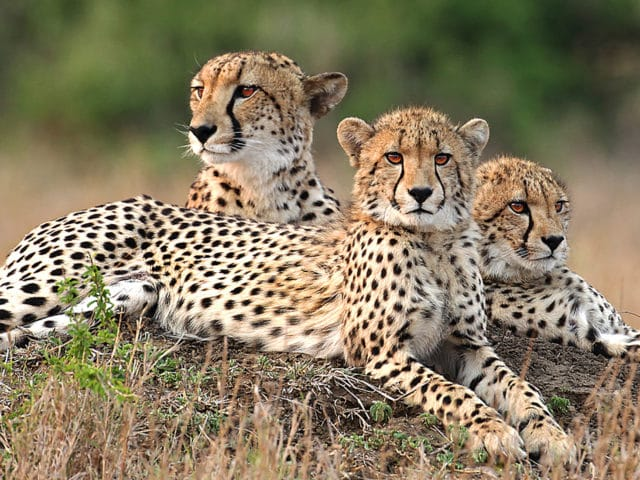 Serengeti Safari Experience Tour