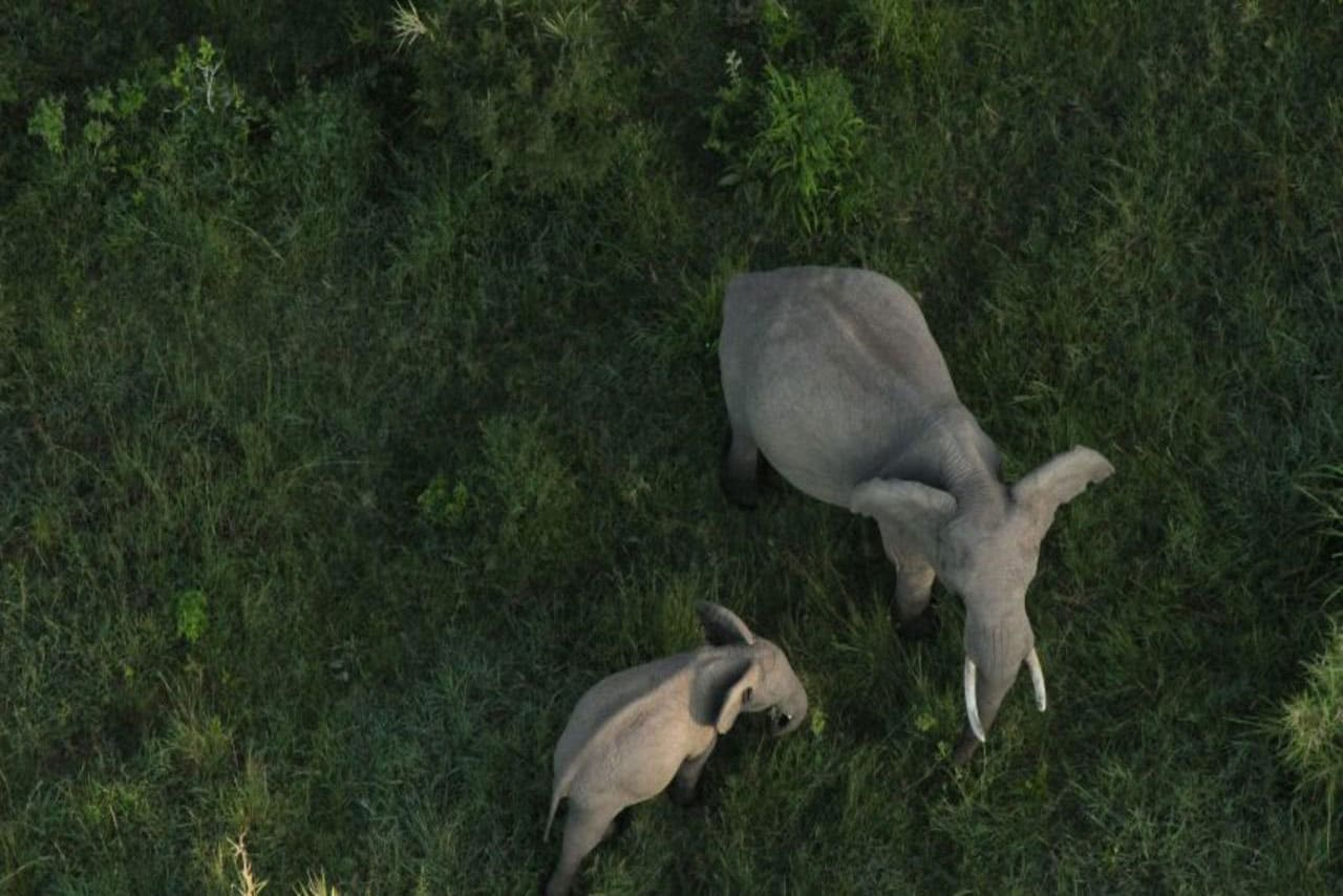 View of elephants from hot air balloon safari
