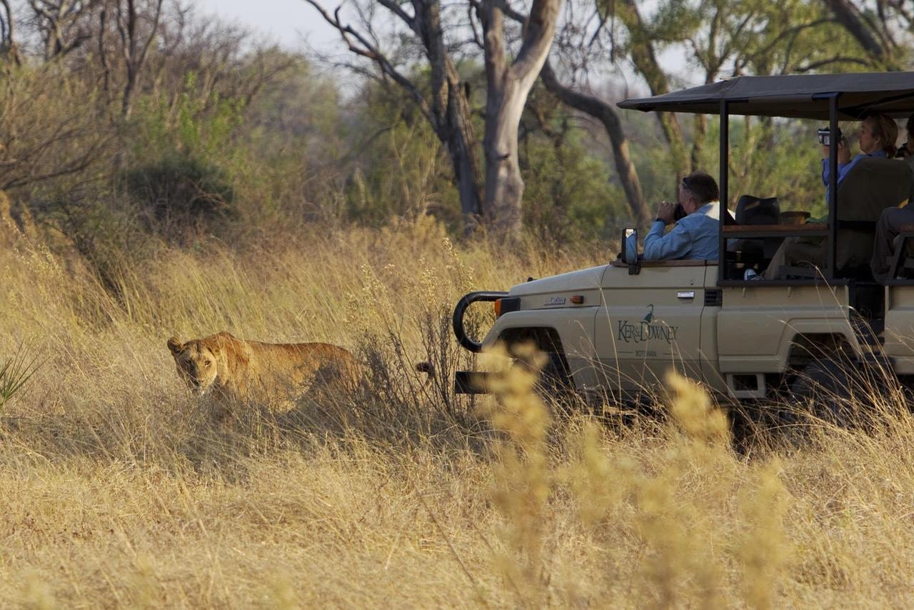 https://www.safariventures.com/wp-content/uploads/2019/01/CarGuestsLion_Kan_5496.jpg