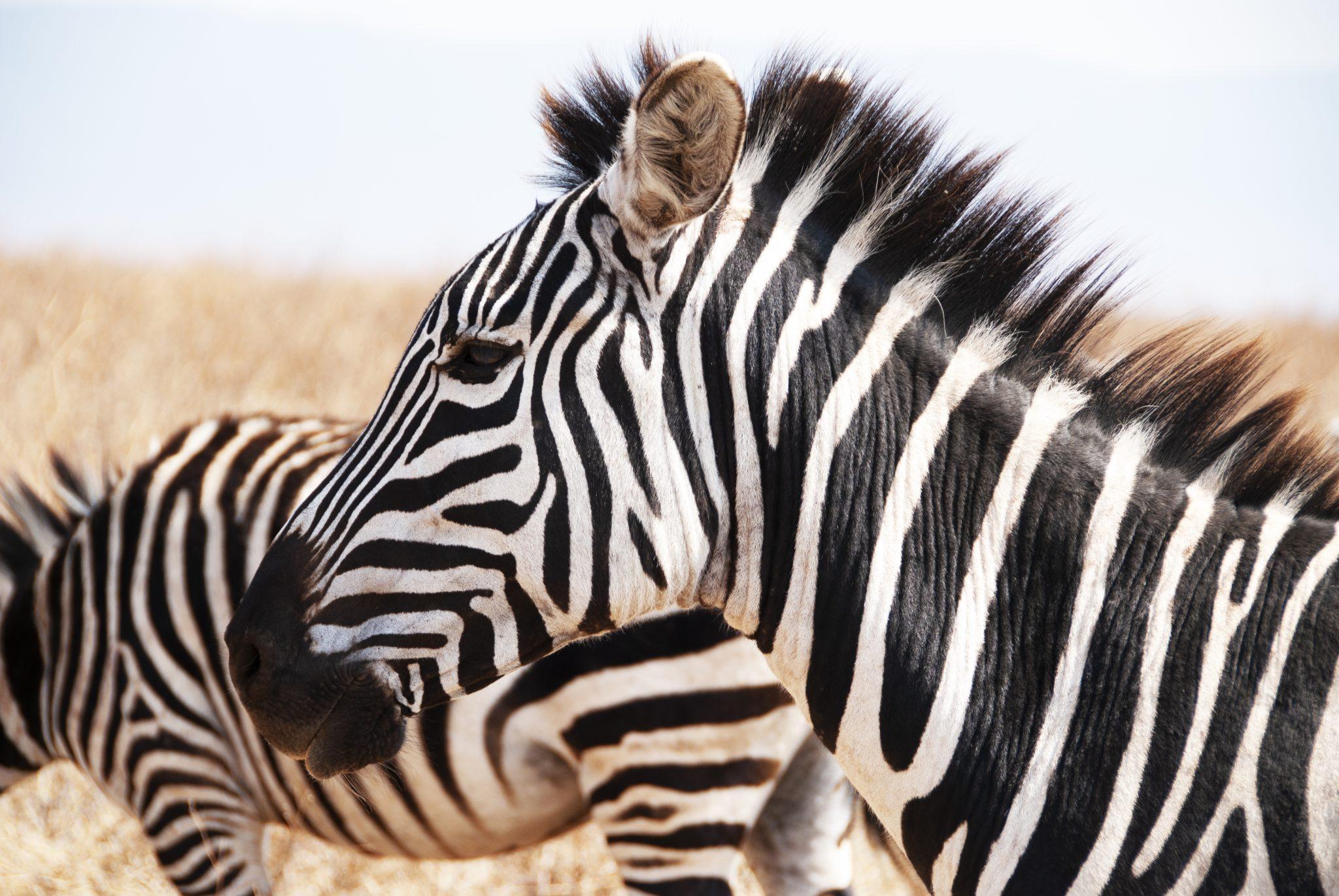 https://www.safariventures.com/wp-content/uploads/2019/01/DSC3591.jpg