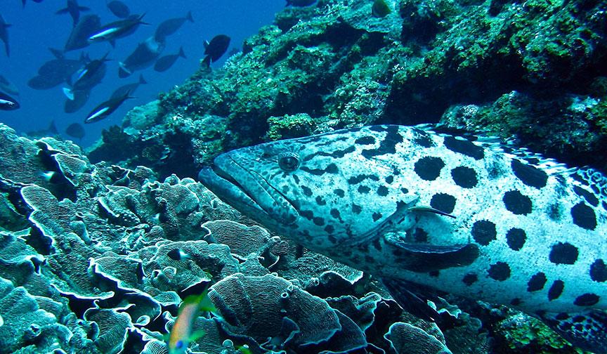 Marine Life Near Zanzibar