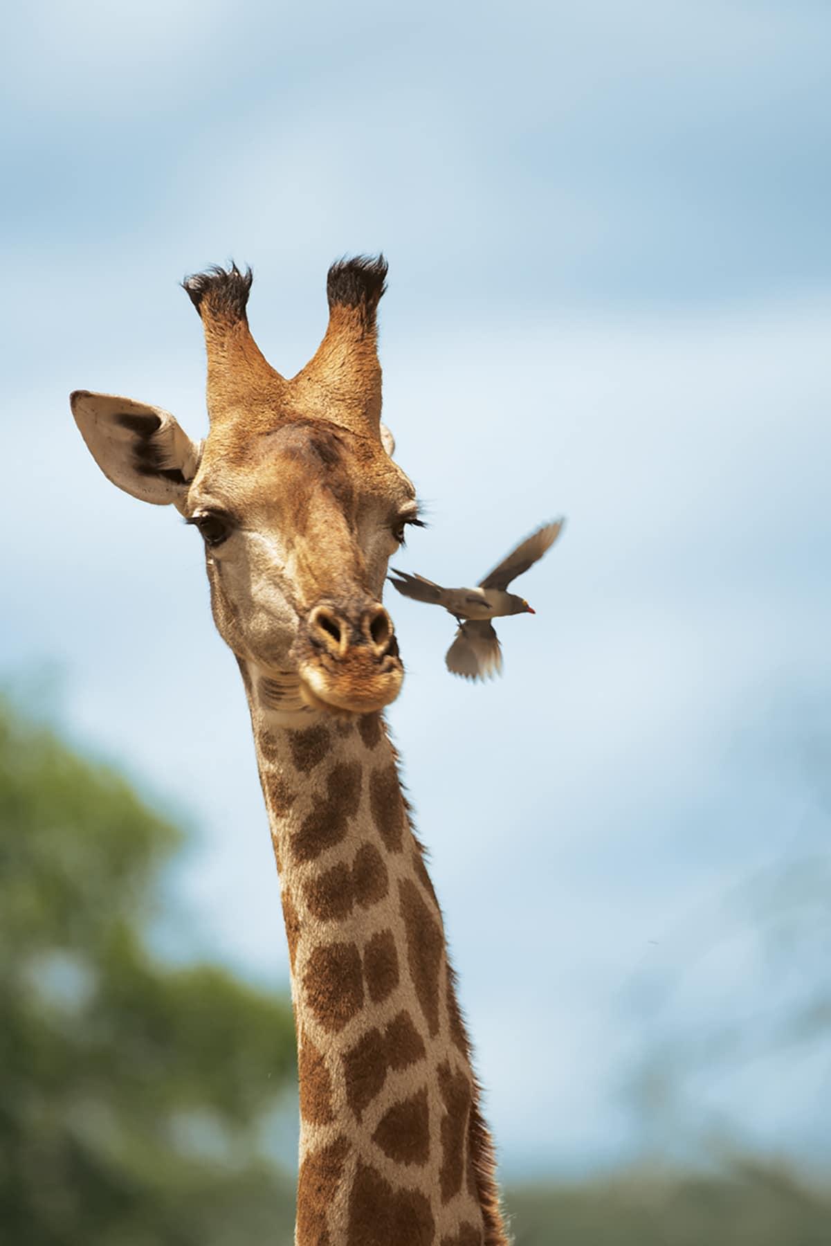 Tips to Planning a Safari Adventure