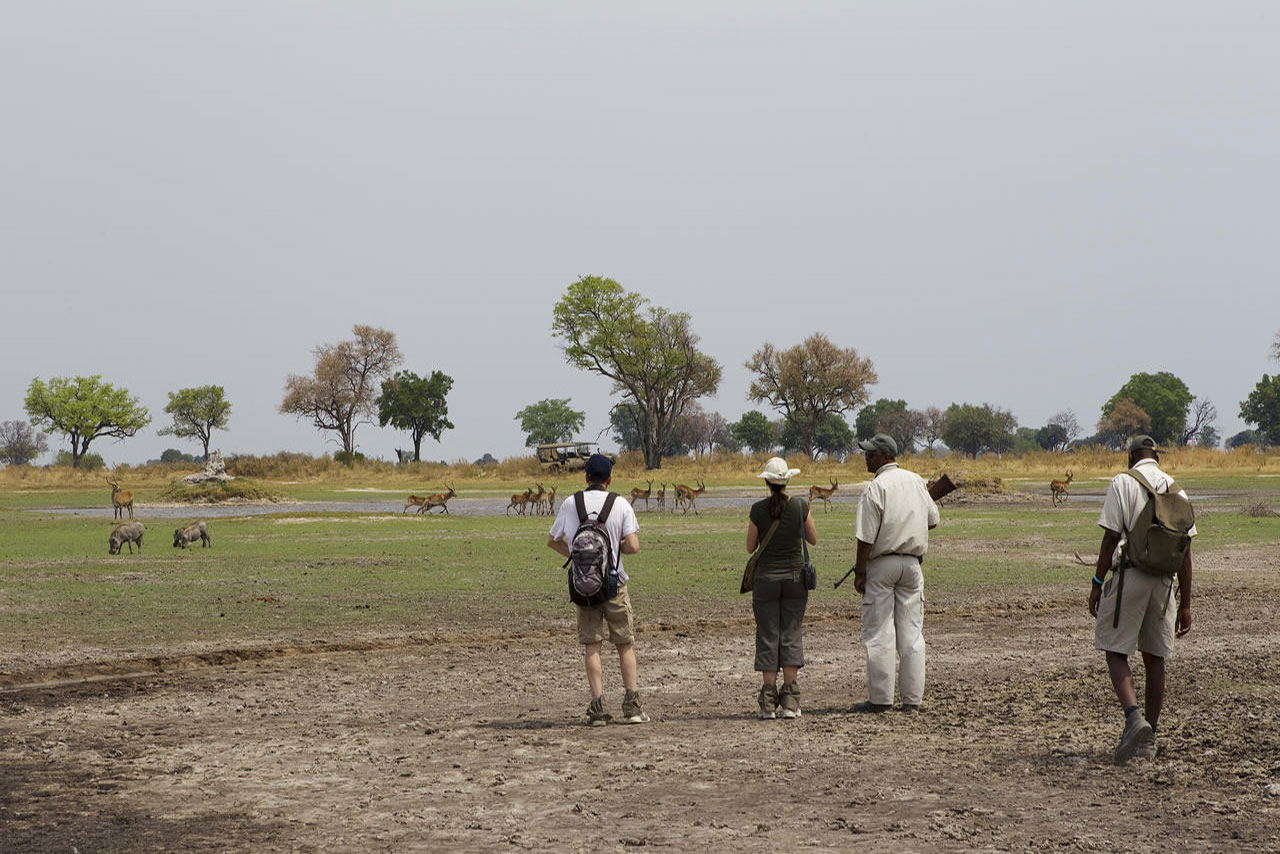 Walking Safari Along Okavango Delta