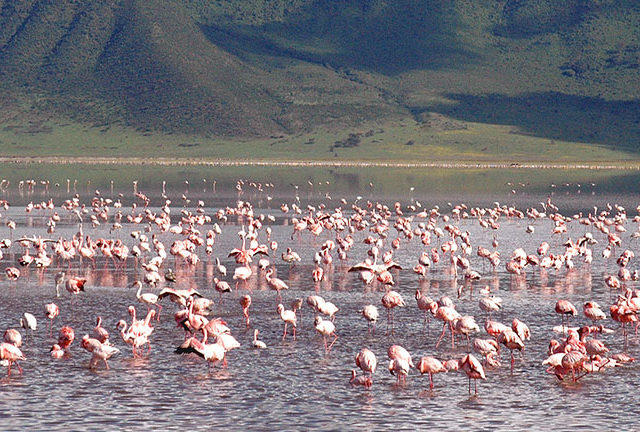 https://www.safariventures.com/wp-content/uploads/2019/01/Ngorongoro_Flamingo_Lake-640x432.jpg