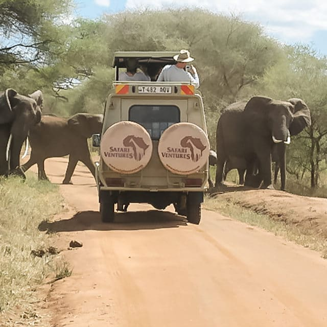 Travel Tips safari