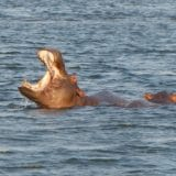 https://www.safariventures.com/wp-content/uploads/2019/01/hippos-518410_1920-tour-160x160.jpg