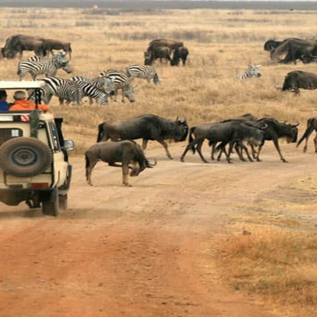 https://www.safariventures.com/wp-content/uploads/2019/01/karatu_1-1-640x640.jpg