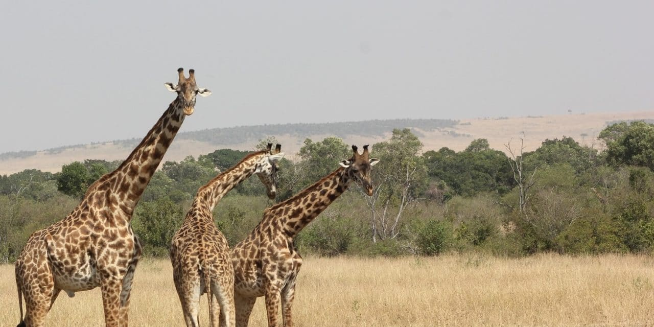 https://www.safariventures.com/wp-content/uploads/2019/01/safari-2833281_1920-edited-3-1280x640.jpg