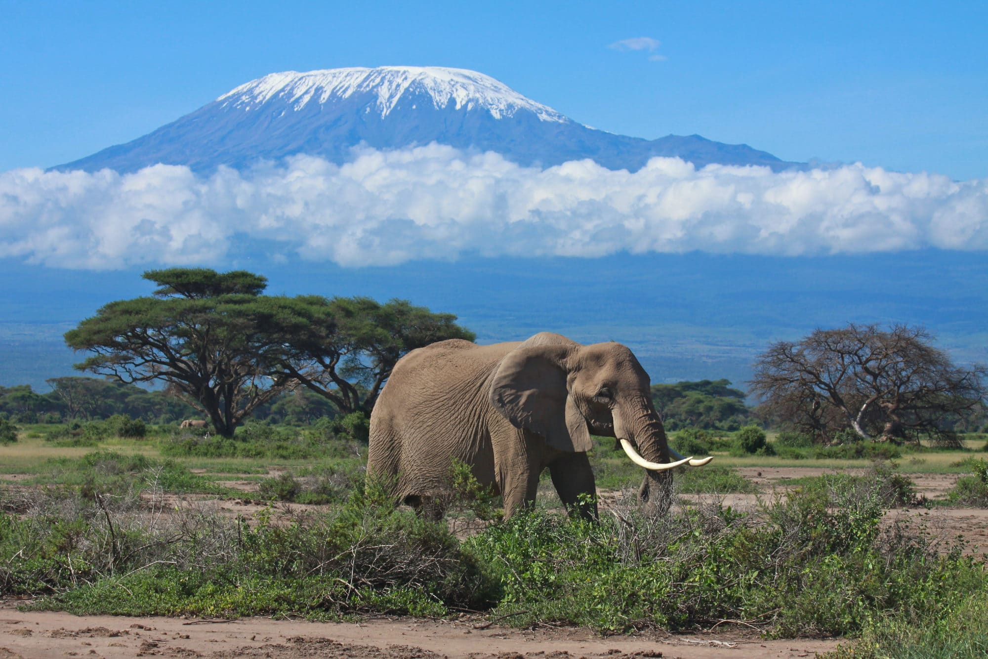 mount kilimanjaro and an elephant