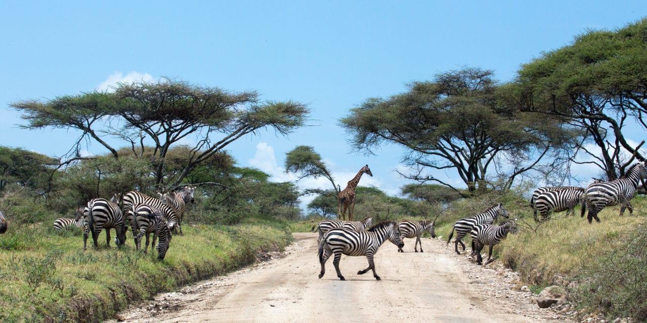 https://www.safariventures.com/wp-content/uploads/2019/01/shutterstock_serengeti-and-ngorongoro-tanzania-277705853-1280x640.jpg