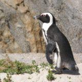 https://www.safariventures.com/wp-content/uploads/2019/01/south-africa-1250581_1920-160x160.jpg