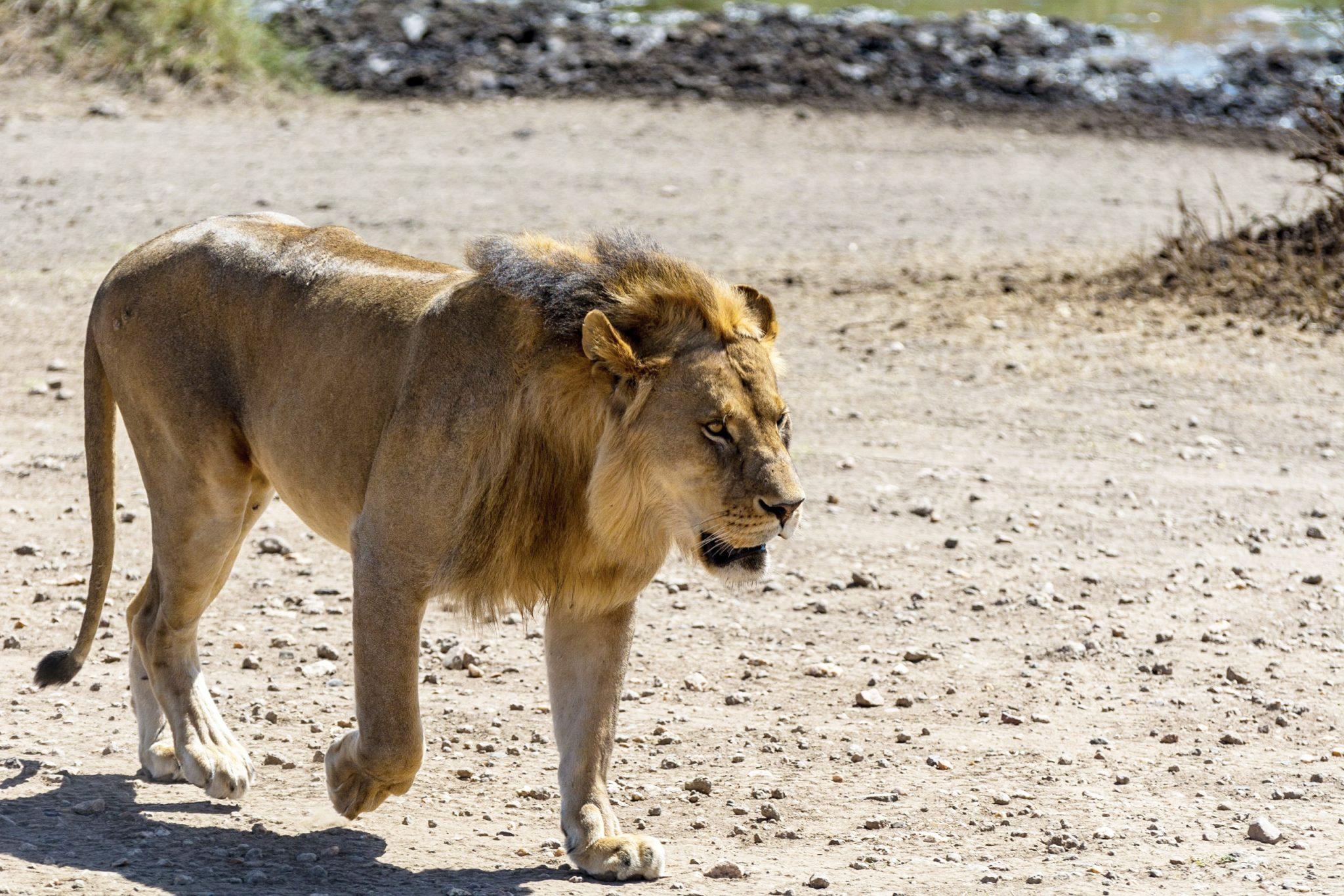 https://www.safariventures.com/wp-content/uploads/2019/01/untitled-73913904.jpg
