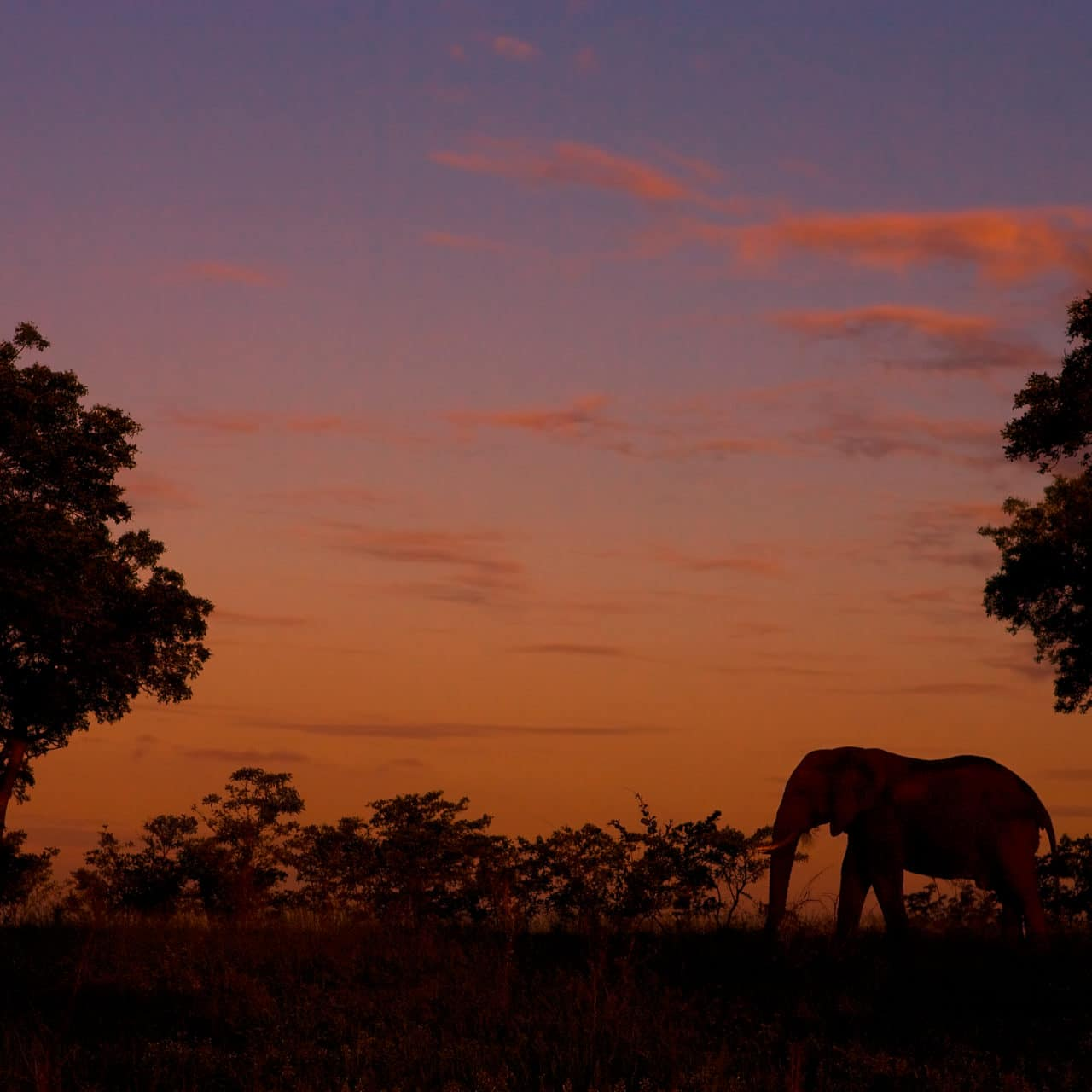 elephant and african sunset