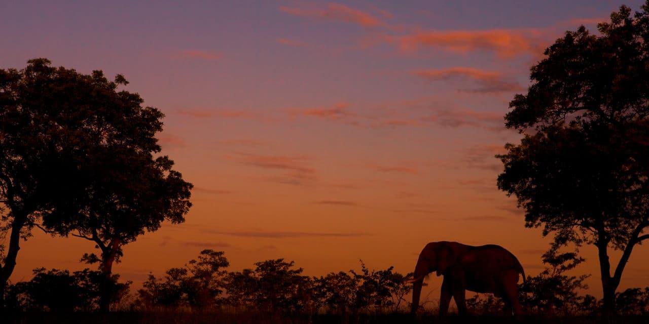 https://www.safariventures.com/wp-content/uploads/2019/02/Elephant-6-1280x640.jpg