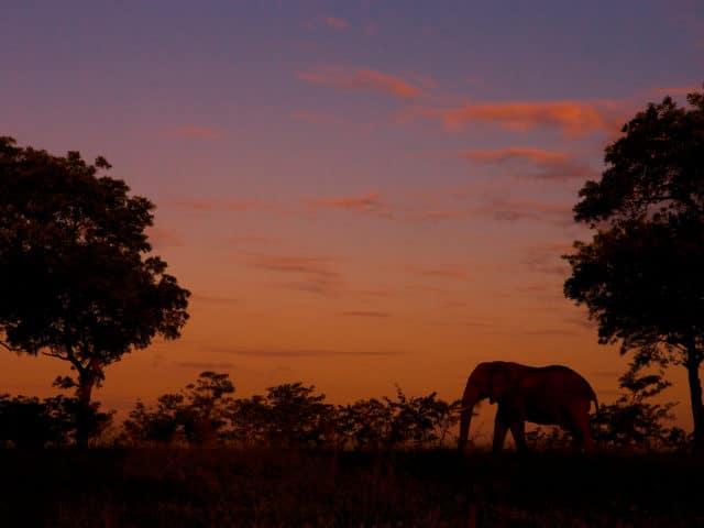 https://www.safariventures.com/wp-content/uploads/2019/02/Elephant-6-640x480.jpg