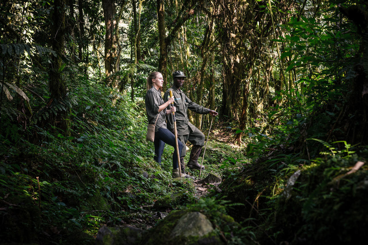 People on a gorilla trek in the forest