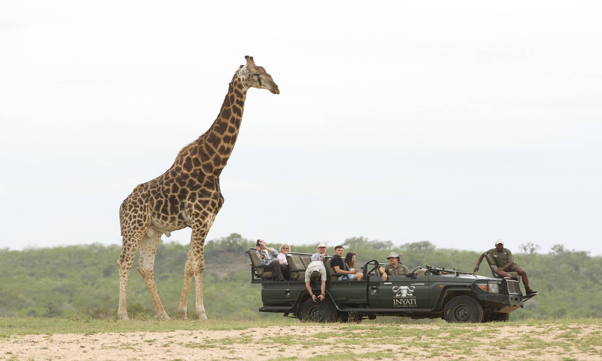 giraffe viewing while on game drive in Sabi Sand Game Reserve