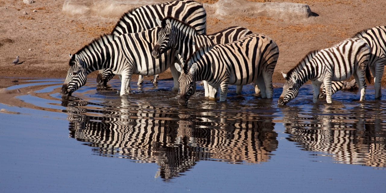 https://www.safariventures.com/wp-content/uploads/2019/02/Mokuti_Etosha_Lodge_-_Zebra_at_Waterhole-1280x640.jpg