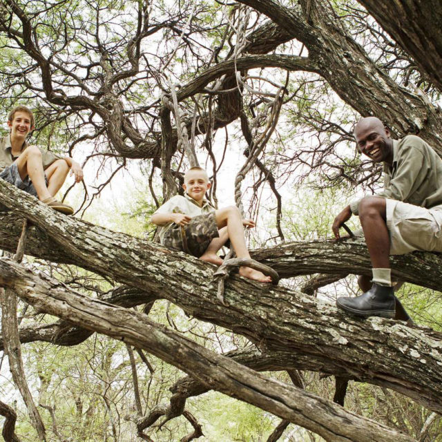 kids hanging out in a tree