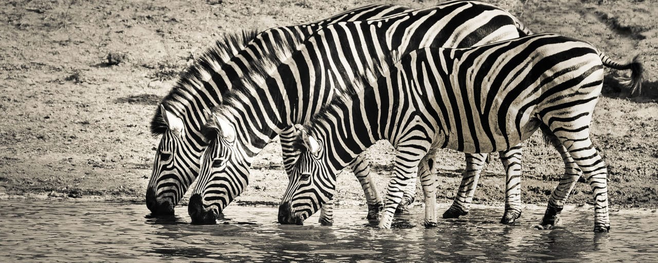 https://www.safariventures.com/wp-content/uploads/2019/02/SV-3456-1280x512.jpg