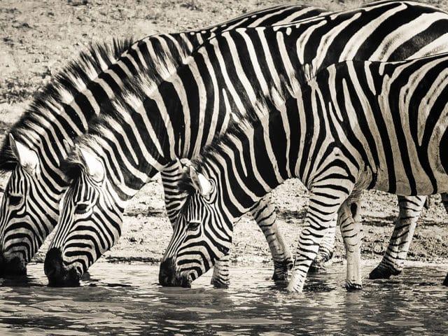 https://www.safariventures.com/wp-content/uploads/2019/02/SV-3456-640x480.jpg