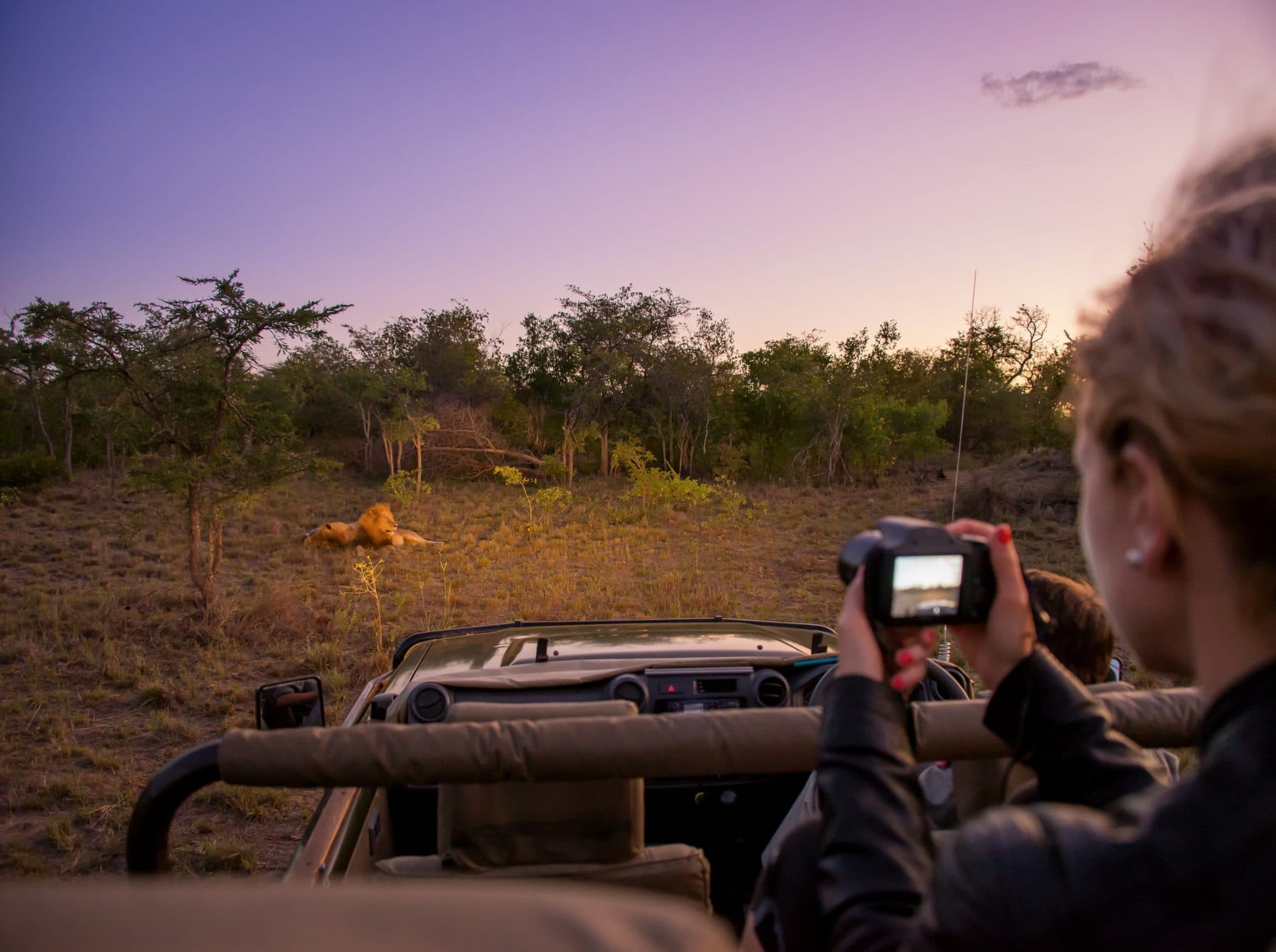 woman taking pictures of lion relaxing while on game drive