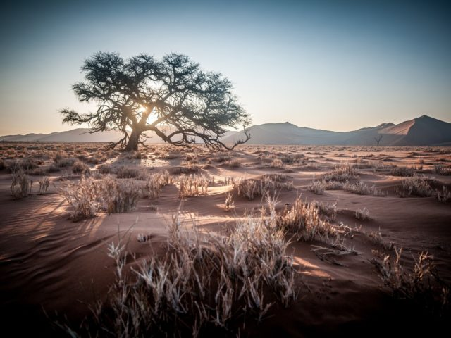 3 Day Desert Adventure in Namibia