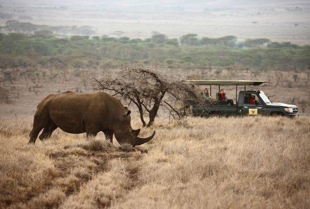 Game drive Rhino sighting