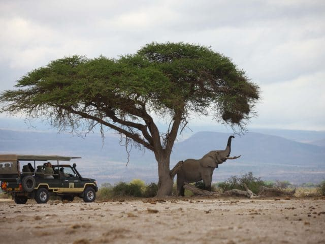 Kenya Luxury Sky Safari Tour