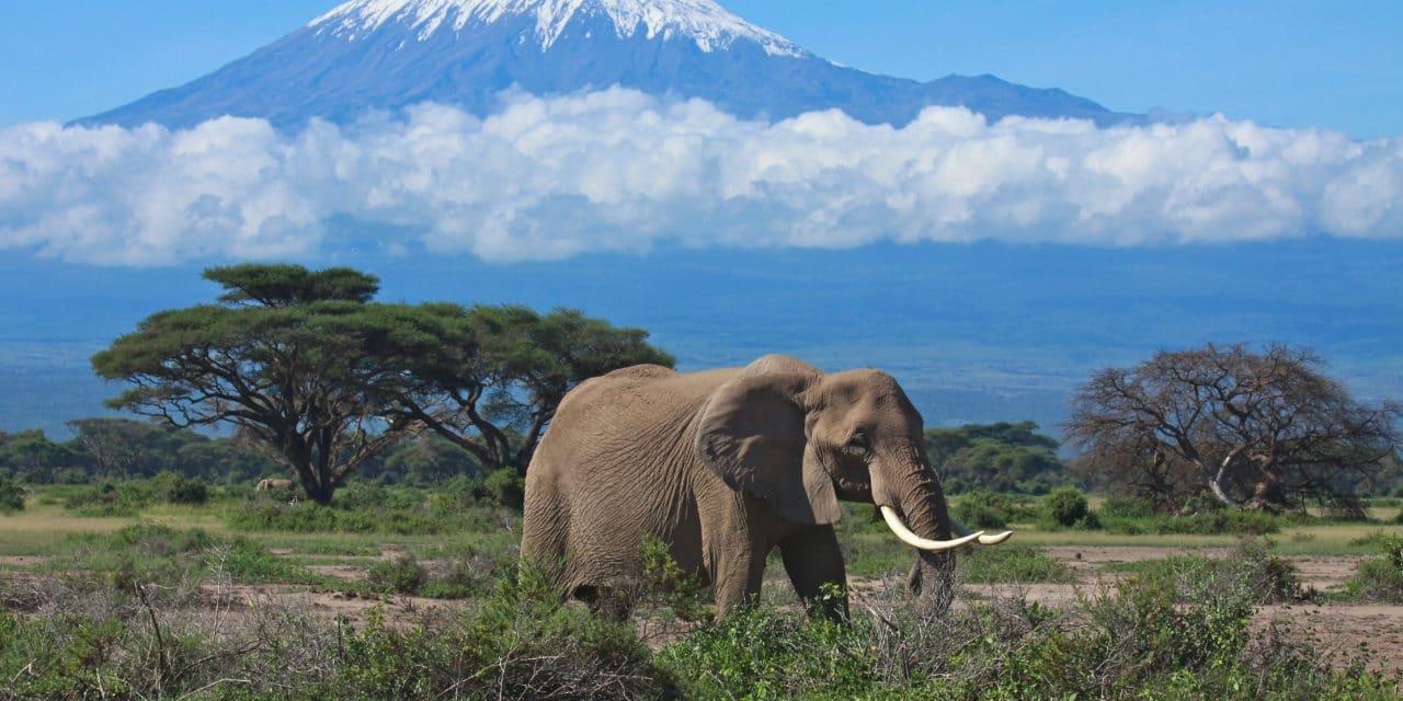 https://www.safariventures.com/wp-content/uploads/2019/02/SV3242-1280x640.jpg