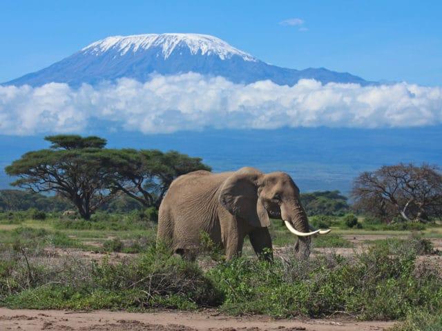 Mt. Kilimanjaro Climb Rongai Route