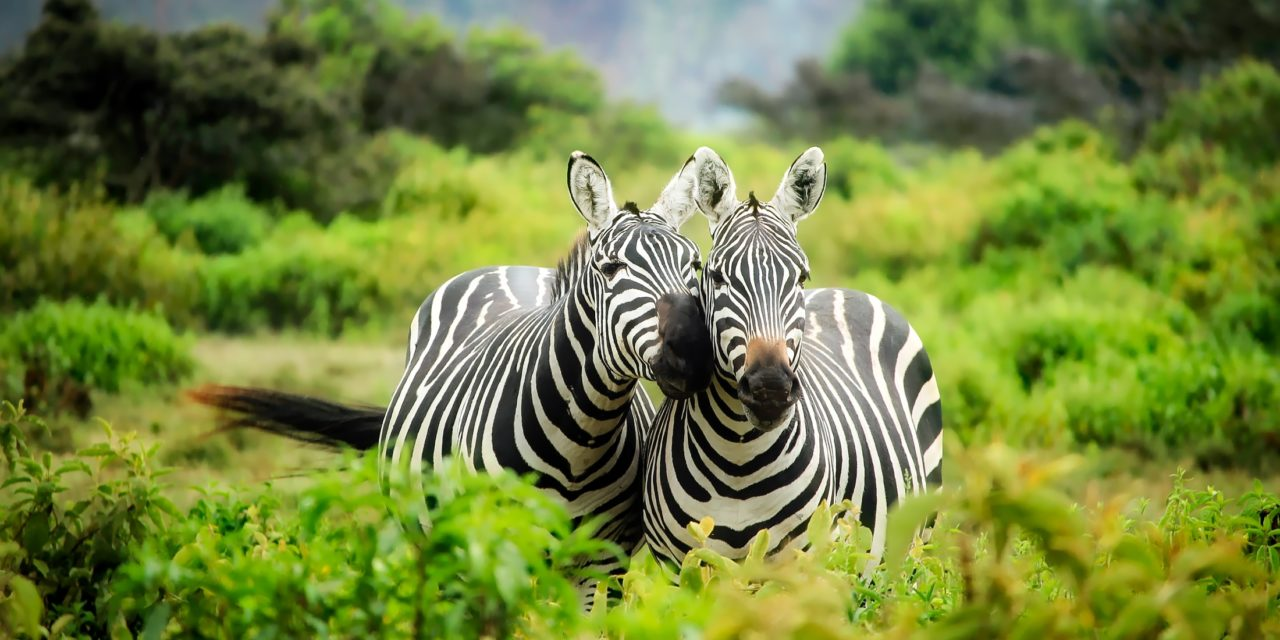 https://www.safariventures.com/wp-content/uploads/2019/02/SV5555-1280x640.jpg