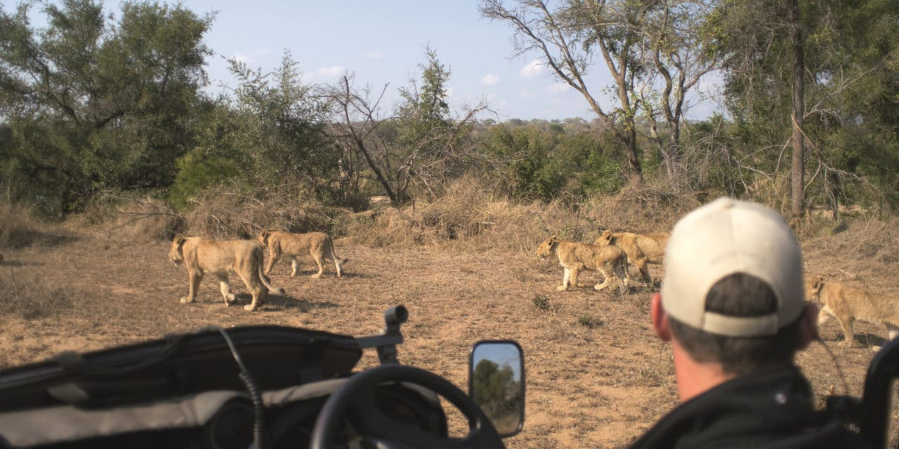 https://www.safariventures.com/wp-content/uploads/2019/02/SV5676-1280x640.jpg