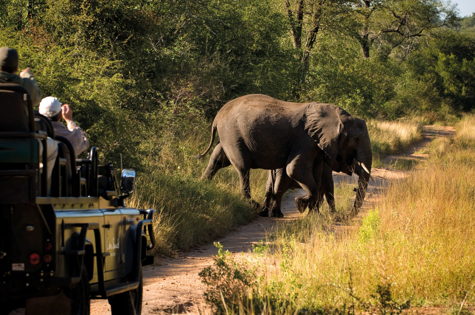 view of an elephant during a safari game drive