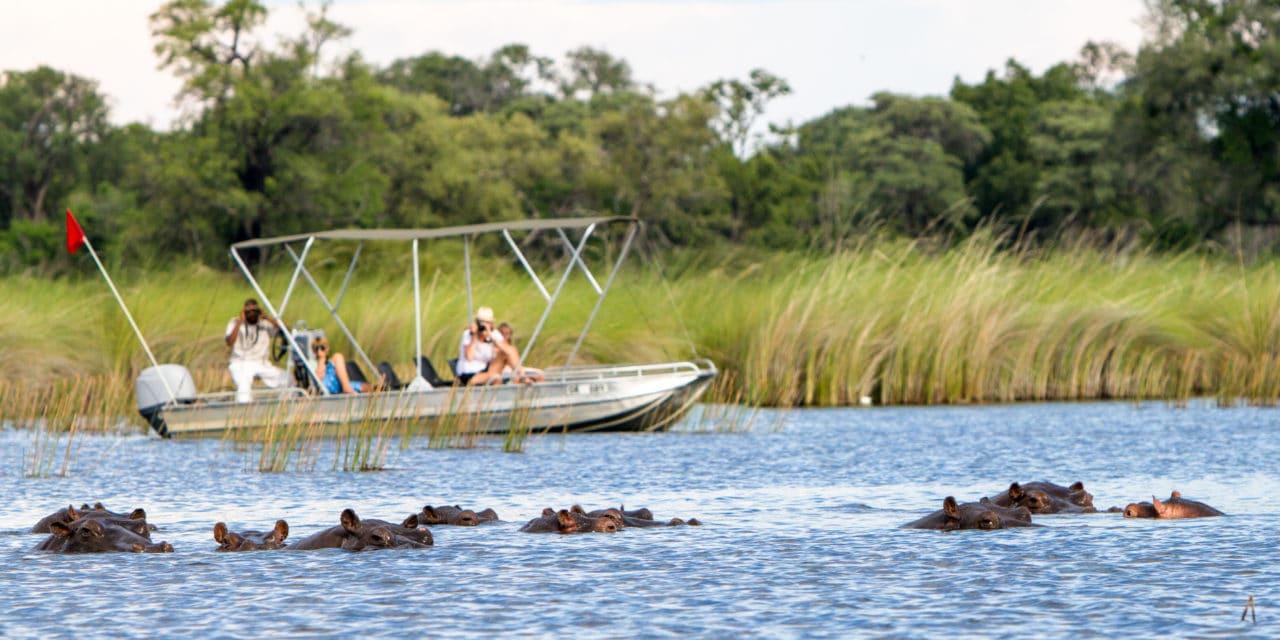 https://www.safariventures.com/wp-content/uploads/2019/02/camp-moremi-boat-safari2-1280x640.jpg