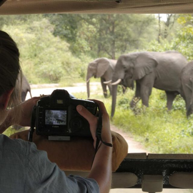 women taking photo of elephants on safari