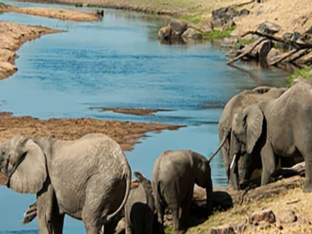 https://www.safariventures.com/wp-content/uploads/2019/02/shutterstock_114144931-1-640x480.jpg