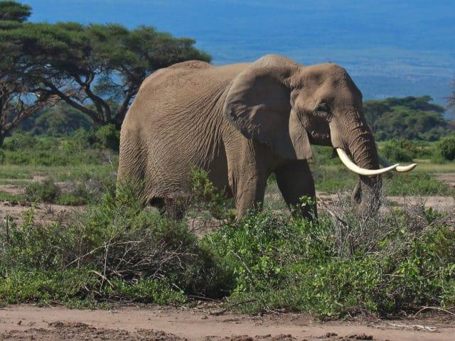 https://www.safariventures.com/wp-content/uploads/2019/02/shutterstock_60854839-1-3-640x480.jpg