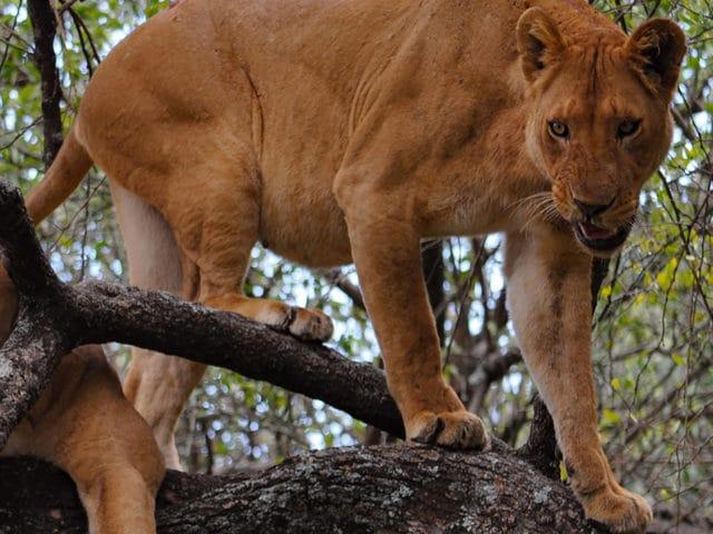 https://www.safariventures.com/wp-content/uploads/2019/02/shutterstock_708736912-640x480.jpg