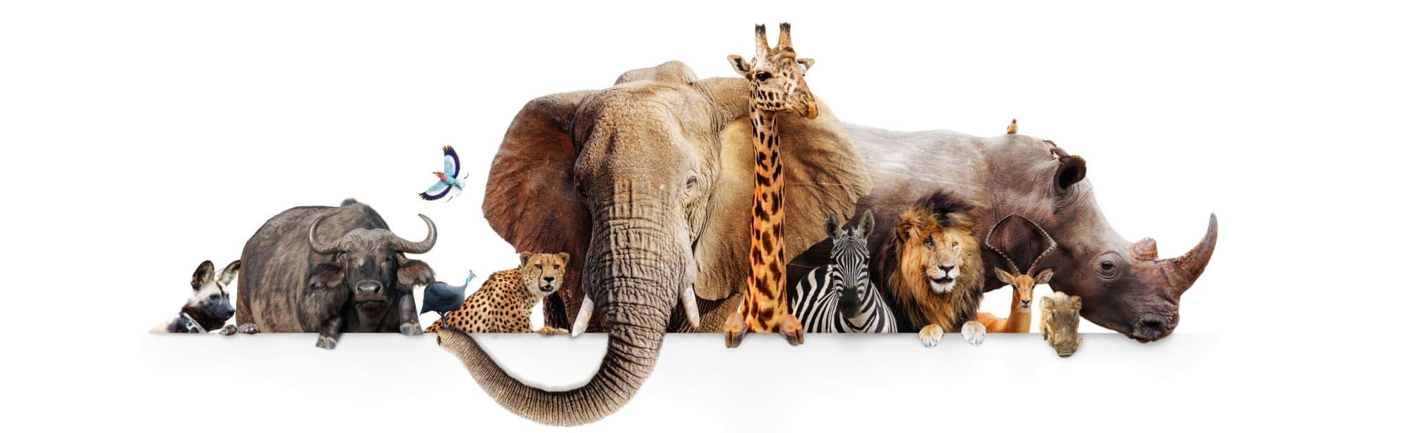 https://www.safariventures.com/wp-content/uploads/2019/02/shutterstock_760704667-2.jpg