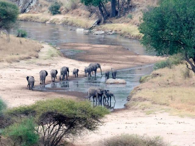 https://www.safariventures.com/wp-content/uploads/2019/02/shutterstock_793328692-1-1-640x480.jpg