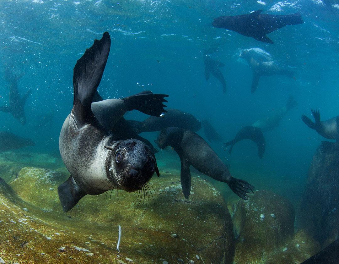 Seal Snorkel At Duiker Island