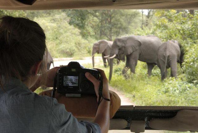 https://www.safariventures.com/wp-content/uploads/2019/03/SV3406-640x432.jpg