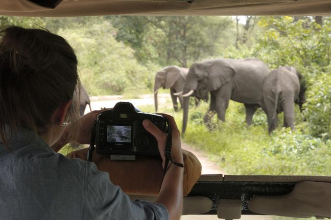 https://www.safariventures.com/wp-content/uploads/2019/03/SV3406.jpg