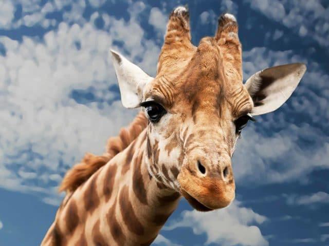 https://www.safariventures.com/wp-content/uploads/2019/06/SV-620-640x480.jpg