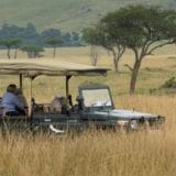 elephant viewing on safari