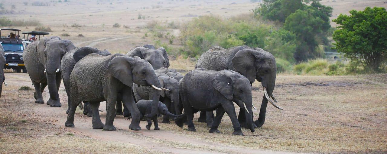 Top Tips- Safari Travel Blog   Safari Ventures