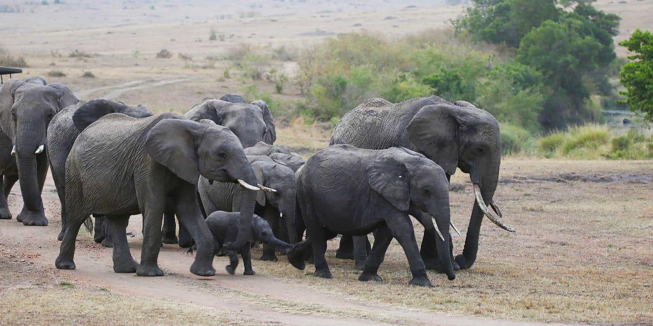 https://www.safariventures.com/wp-content/uploads/2019/06/SV3023-1280x640.jpg